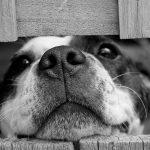 Żywienie psa i kota – domowe jedzenie czy karma